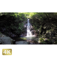 1004003 ■ 秋川渓谷 払沢の滝