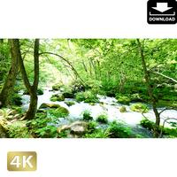 2035041 ■ 奥入瀬渓流 石ヶ戸の瀬