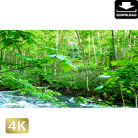 2035099 ■ 奥入瀬渓流 白糸の滝