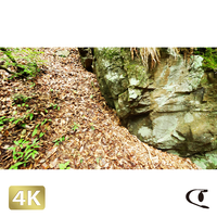1037034 ■ 御岳山 ロックガーデン