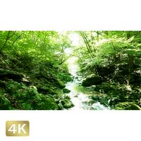 1005005 ■ 秋川渓谷 南秋川渓谷