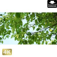 2034007 ■ 渡良瀬遊水池 樹木