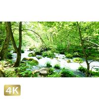 1035041 ■ 奥入瀬渓流 石ヶ戸の瀬