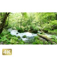 1035003 ■ 奥入瀬渓流 渓流