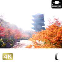 2043040 ■ 京都 東寺の紅葉