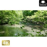 2035001 ■ 奥入瀬渓流