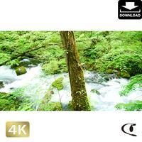 2035062 ■ 奥入瀬渓流