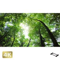 1003001 ■ 日光 中禅寺湖畔 樹木