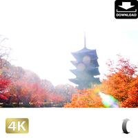 2043041 ■ 京都 東寺の紅葉