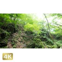 1037011 ■ 御岳山 ロックガーデン