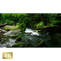 1035084 ■ 奥入瀬渓流 阿修羅の流れ