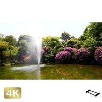 1033001 ■ 柿田川 噴水