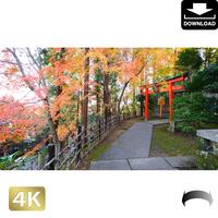 2043053 ■ 京都 東寺の紅葉