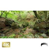 1037027 ■ 御岳山 ロックガーデン