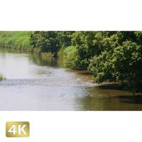 1034003 ■ 渡良瀬遊水池 川