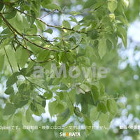 1034021 ■ 渡良瀬遊水池 樹木