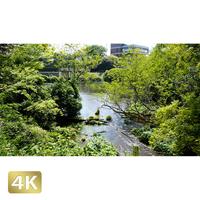 1033033 ■ 柿田川 清流