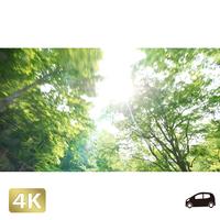 1035039 ■ 奥入瀬渓流 林道