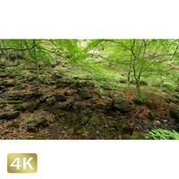 1037025 ■ 御岳山 ロックガーデン