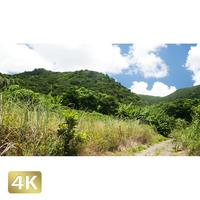 1038040 ■ 石垣島 於茂登岳