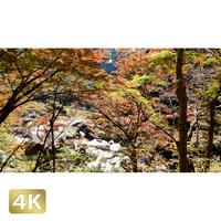 1015001 ■ 昇仙峡 紅葉