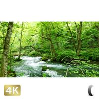 1035109 ■ 奥入瀬渓流 白布の滝