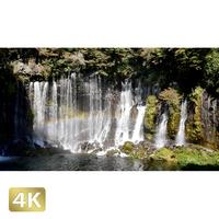 1015036 ■ 静岡 白糸の滝