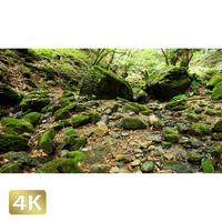 1037036 ■ 御岳山 ロックガーデン