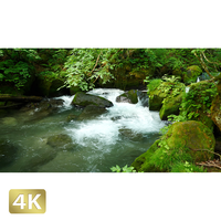 1035086 ■ 奥入瀬渓流 阿修羅の流れ