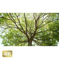 1034005 ■ 渡良瀬遊水池 樹木