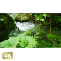 1035088 ■ 奥入瀬渓流 渓流