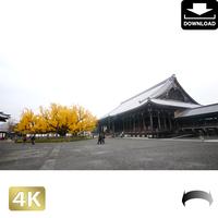 2043125 ■ 京都 西本願寺 紅葉