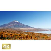 1015021 ■ 富士山 紅葉