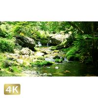 1004018 ■ 秋川渓谷 北秋川