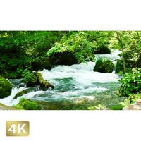 1035107 ■ 奥入瀬渓流 阿修羅の流れ