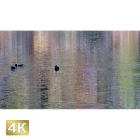 1014026 ■ 日光 紅葉 湯ノ湖