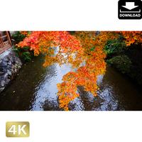 2043095 ■ 京都 祇園白川