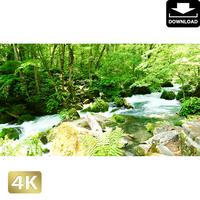 2035106 ■ 奥入瀬渓流 阿修羅の流れ