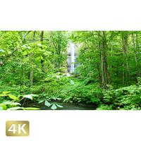 1035072 ■ 奥入瀬渓流 白布の滝