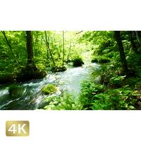 1035018 ■ 奥入瀬渓流 阿修羅の流れ