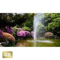 1033005 ■ 柿田川 噴水