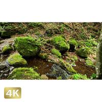 1037051 ■ 御岳山 ロックガーデン