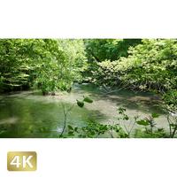 1035001 ■ 奥入瀬渓流 渓流