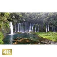 1011014 ■ 静岡 白糸の滝