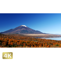 1015022 ■ 富士山 紅葉