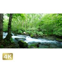 1035024 ■ 奥入瀬渓流 三乱の流れ
