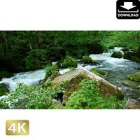 2035031 ■ 奥入瀬渓流 阿修羅の流れ