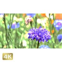 1024023 ■ 花畑 小花