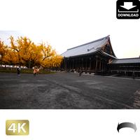 2043119 ■ 京都 西本願寺 紅葉