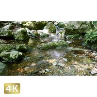 104005 ■ 秋川渓谷 払沢の滝